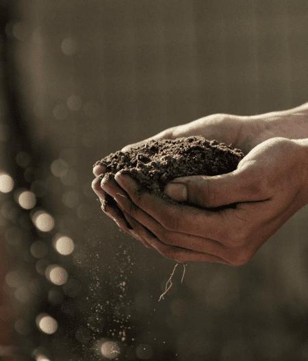 mains dans la terre